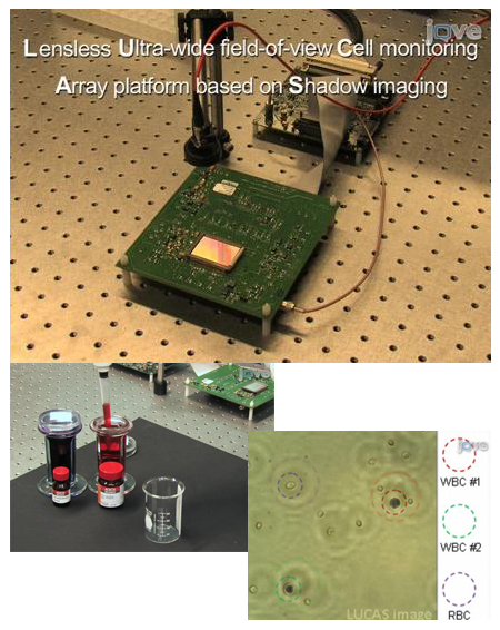 Lensless On-chip Imaging of Cells Provides a New Tool for Cell-Biology and Diagnostics