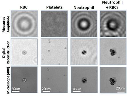 Lensfree on-chip holography facilitates novel microscopy applications