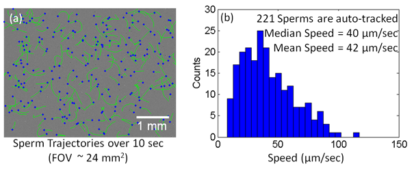 A Compact and Light-weight Automated Semen Analysis Platform using Lensfree On-Chip Microscopy