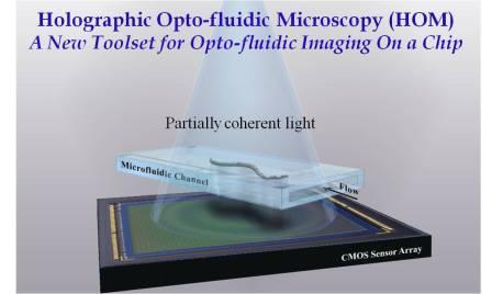Holographic Opto-fluidic Microscopy